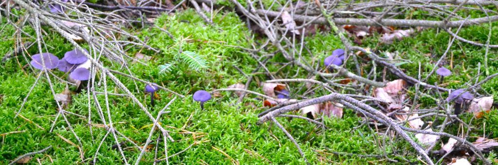 purpledeceiver