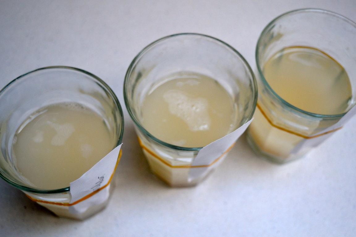 yeast-experiment